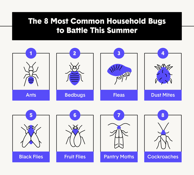 8-common-household-bugs.png