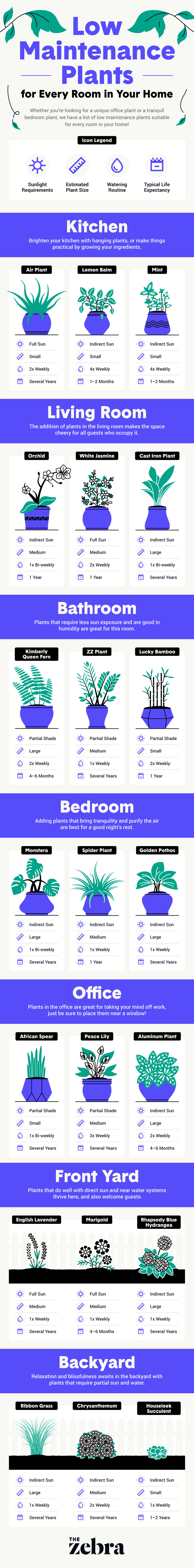 Low Maintenance House plants