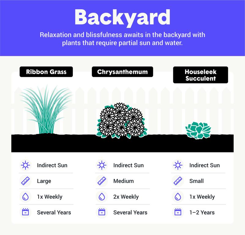 best backyard plants image