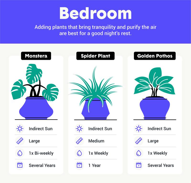 best houseplants for bedroom image