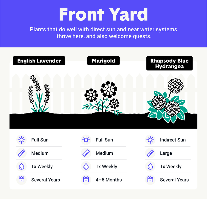 best plants for front yard image
