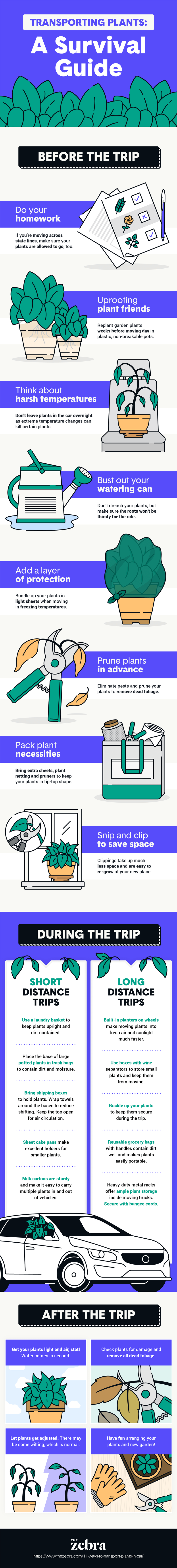 how to transport plants in a car infographic