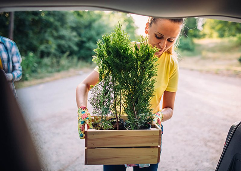 how to transport plants in your car